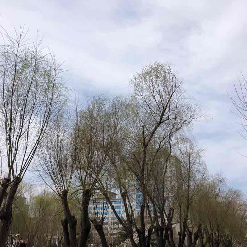 民心河 散歩道 - 石家荘市, 中国   Pacer